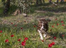 En hund som hämtar en pinne royaltyfri fotografi