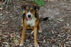 En hund, som har hundhår på framsidablicken som, bar exponeringsglas som sitter på jordningen Arkivbild