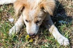 En hund som kysser med en avmaska Fotografering för Bildbyråer