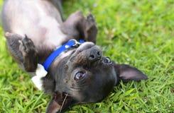 En hund som lägger på jordning Fotografering för Bildbyråer