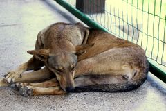 En hund som sover en kiosk arkivfoto