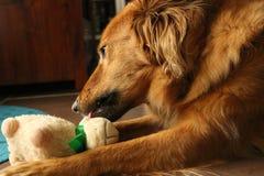 En hund som spelar med ett får Arkivfoton
