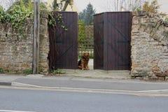 En hund som tålmodigt väntar på portar royaltyfria bilder