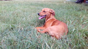 En hund som tycker om liv Arkivbilder