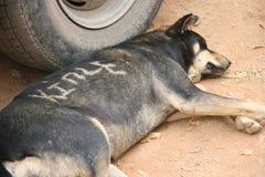 En hund sover på det jord (Bhutan) arkivbilder