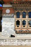 En hund vilar framme av en av korridorerna av en tempel (Bhutan) fotografering för bildbyråer