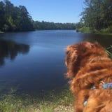 En hundkapplöpningsikt Royaltyfria Bilder