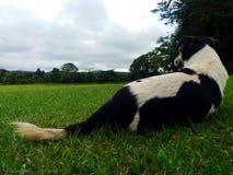 En hundsikt royaltyfri fotografi