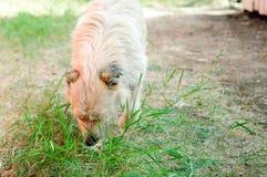 En hungrig hund söker efter mat på jordningen fotografering för bildbyråer