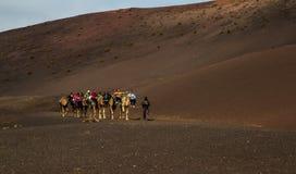 En husvagn av kamel av packar med ryttare arkivfoton