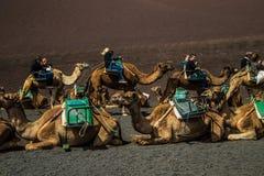 En husvagn av kamel av packar med ryttare royaltyfria bilder