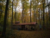 En hydda i mitt av skogen fotografering för bildbyråer