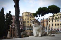 En i huvudrollen härlig ledsen katt hans eget territorium Royaltyfri Foto