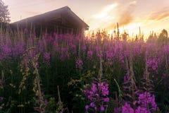 En by i norden av Ryssland Royaltyfri Fotografi