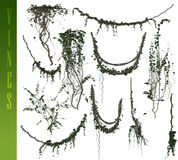 vines 3D Royaltyfria Bilder