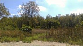 En Indiana Landscape arkivfoton