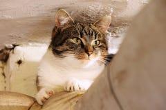 En inhemsk katt ligger omkring Henne som kopplar av på röret över ugnen på källaren Mång- kulör framsida av katten med gröna ögon royaltyfria foton