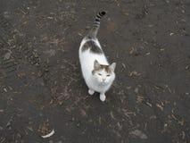 En inhemsk katt på våt jordning Arkivbild
