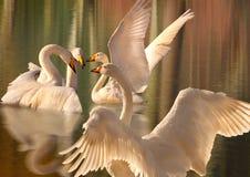 En insamling av Swans Royaltyfri Fotografi