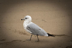 En intressant fågel i Beverly, Massachusetts USA Royaltyfri Foto