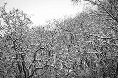 En invierno, la nieve ligera cayó en el parque Imagen de archivo