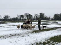 En irländsk bonde Arkivfoto