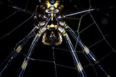 En jätte- tigersvart och ett gult spindelslut upp och ett makroskott arkivfoton