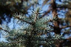 En julgran är ett dekorerat träd royaltyfria bilder