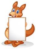 En känguru som rymmer en tom whiteboard Arkivbilder
