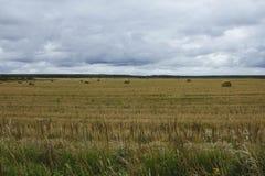 En kärve av hö på gult höstfält på en molnig himmel för bakgrund Sk?rden av h? Höstlandskap i fältet royaltyfri bild