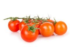 En körsbärsröd tomat som jämförs till annan tomat Arkivfoton