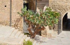En kaktusväxt Royaltyfri Fotografi