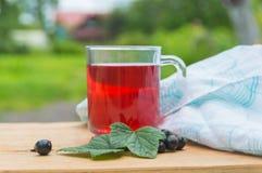 En kall drink från bären av den svarta vinbäret Royaltyfria Foton