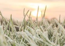 En kall hård frost på grässtrån royaltyfria foton