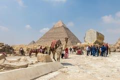 En kamel framme av pyramiden av Khafre, Egypten royaltyfria foton