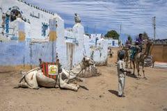 En kamel kopplar av i den Nubian byn av skrud-Sohel i Egypten arkivbilder
