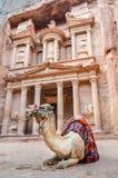 En kamel vilar framme av kassan, Petra, Jordanien Fotografering för Bildbyråer