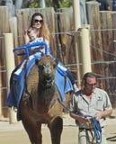 En kamelritt på Reid Park Zoo Royaltyfria Bilder