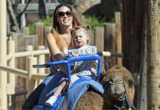 En kamelritt på Reid Park Zoo Arkivfoton