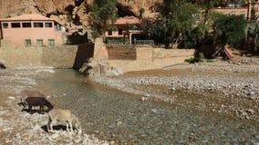 En kanjon i Maroc med åsnor på floden royaltyfria foton