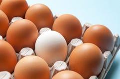 En kartong med fega ägg är brun och vit Särdrag skillnader royaltyfria bilder