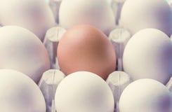 En kartong med fega ägg är brun och vit Särdrag skillnader arkivfoton