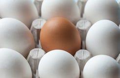 En kartong med fega ägg är brun och vit Särdrag skillnader fotografering för bildbyråer