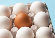 En kartong med fega ägg är brun och vit Särdrag skillnader royaltyfri fotografi