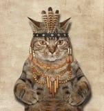 En katt är en amerikansk indier royaltyfria foton