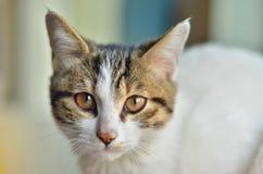 En katt är i staden Royaltyfri Foto