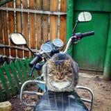 En katt är på en motorcykel Arkivfoton