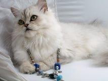En katt Fotografering för Bildbyråer