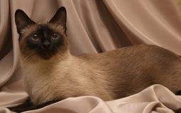 En katt Royaltyfri Fotografi