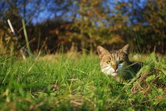 En katt Arkivbilder